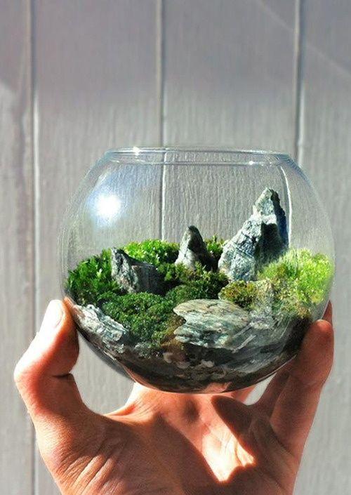 Mini jardin terrarium dans un vase rond.