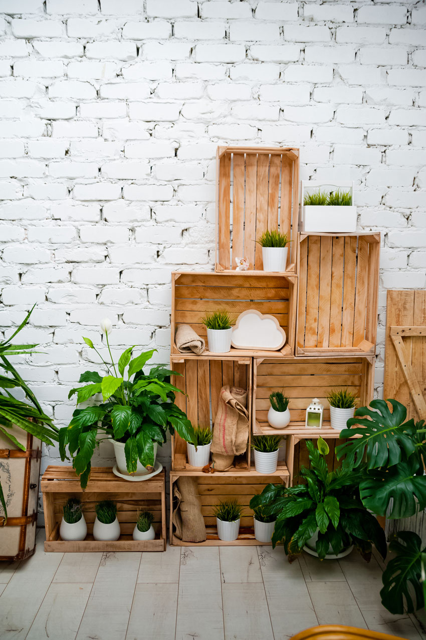 composition de plantes dans des cagettes en bois