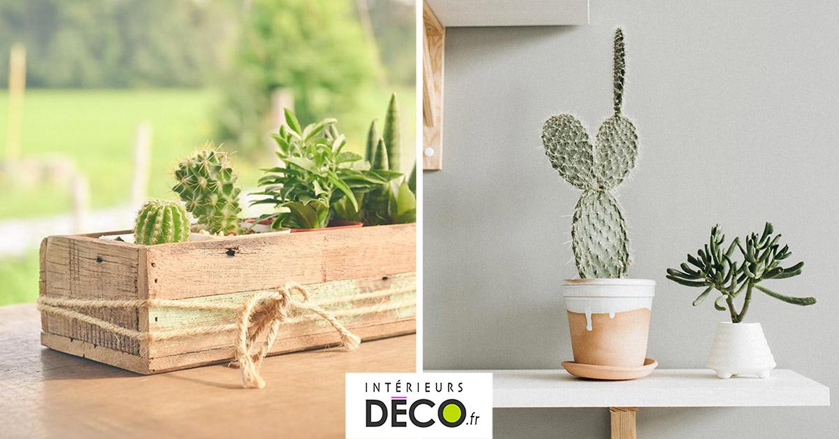 Décorations avec des cactus