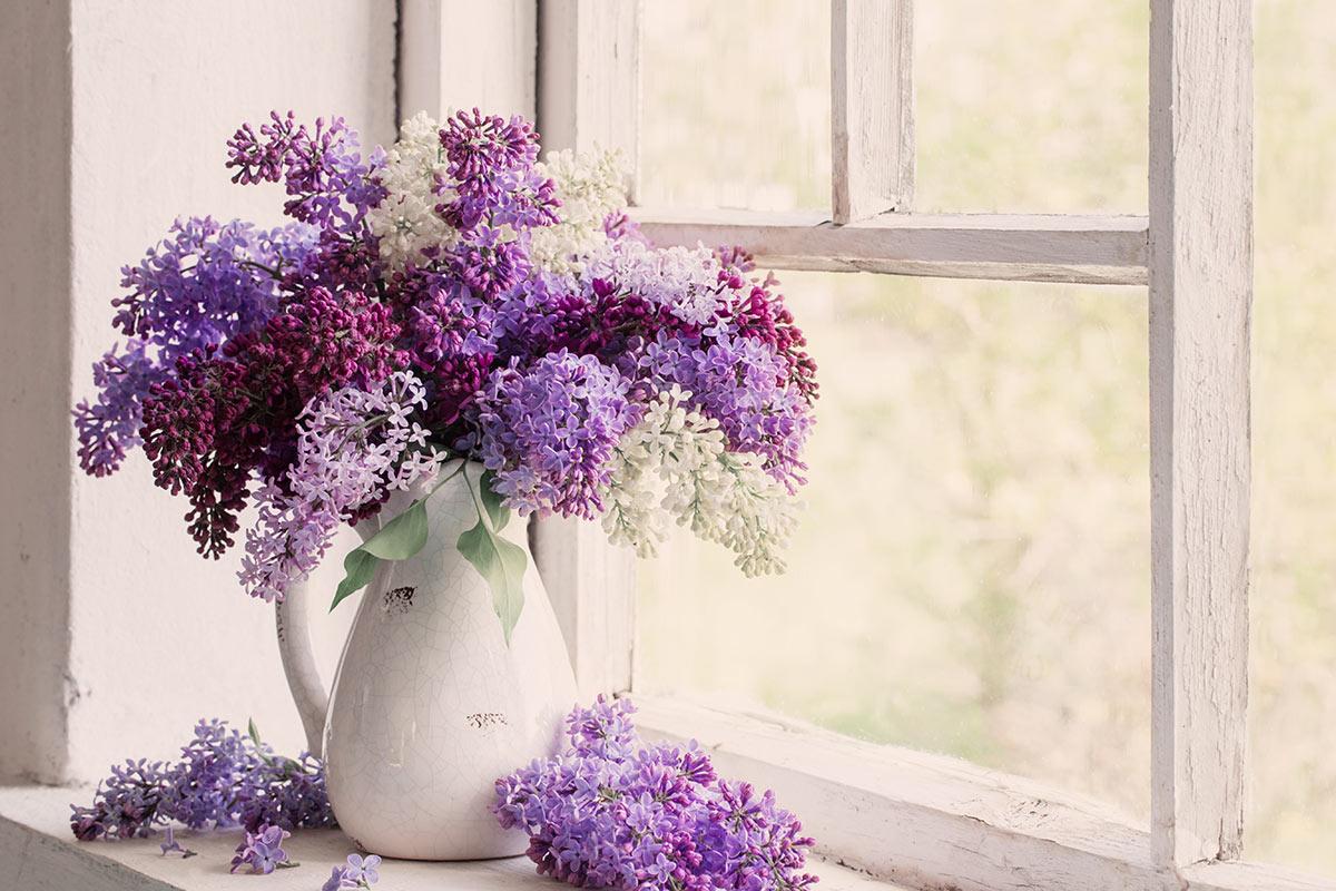 Lilas en vase sur bord de fenêtre.